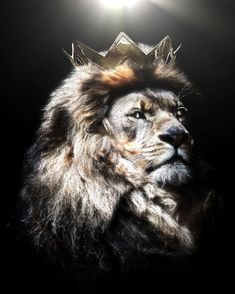 Whenever my lion wears a crown i find myself in the Premier League. Lion King Drawings, Lion King Art, Lion Art, Lion And Lioness, Leo Lion, Lion Of Judah, Lion Images, Lion Pictures, Lion Live Wallpaper