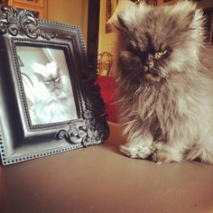 We are Mourning the Passing of Colonel Meow - RIP Col. Meow...may you and Homer the blind kitty be at peace. :(