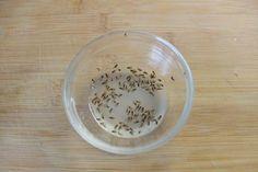 biologische und einfache Fruchtfliegenfalle