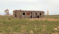 Old railroad boxcar....memories.  They make great storage for hay and even a covered place for a horse to have a baby colt.