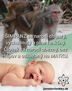 NEUROTRANSMITERY #1 DOPAMÍN a SEROTONÍN Animals, Animales, Animaux, Animal, Animais
