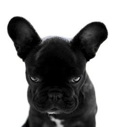 and on her farm she had a frenchie.... whhhaaaat. It could happen... @Jill Meyers Meyers Meyers Rottinghaus :)