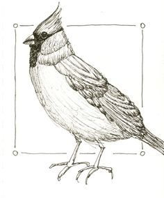 I find it beneficial to do a line drawing study, as the first step, when I have a new subject. This is especially true when I am working with birds. The drawing study gives me an opportunity to f…