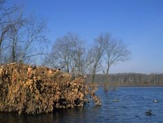 west tennessee duck hunting   Cities & Towns: Dyersburg, TN - Tennessee Vacation