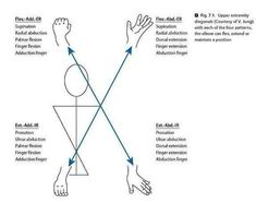 PNF flexion pattern - upper extremity