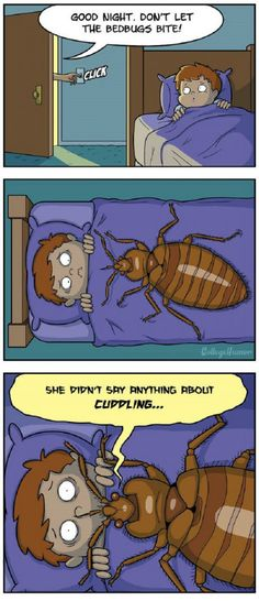 Don't let the bed bugs bite...