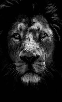 The King of the Jungle.. (by Miguel Angel Junquera)