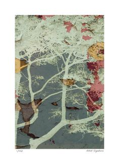 Botanical Limited Edition Posters at AllPosters.com