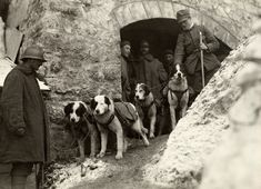 WW1, Italy. Troops stand with their rescue dogs.