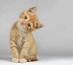 Whatcha doing???? ... . ..#kitten