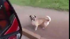 Ve el vídeo «A eso le llamo lealtad» subido por CPost - PalFeis a Dailymotion.