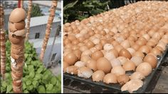 A garden day and eggshell tips Raised Vegetable Gardens, Vegetable Garden Design, Outdoor Garden Decor, Outdoor Gardens, Small Garden Landscape, Hydroponic Farming, Plastic Pumpkins, Garden Animals, Home Remedies For Hair