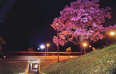 https://flic.kr/p/HVyCj6   060720162sem   Eixão Sul, Brasília - DF.