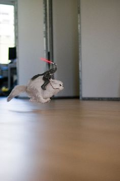 Darth Vader Riding A Cat. Well obviously, since the death star was blown up!