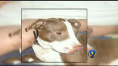 Woman says police officer shot, killed her dog