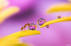 心洗われる。写真家浅井美紀が写し出す繊細で美しいマクロの世界 (2ページ目)|MERY [メリー]