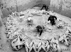 Archaeologists in Ukraine excavate a prehistoric dome dwelling made with mammoth bones