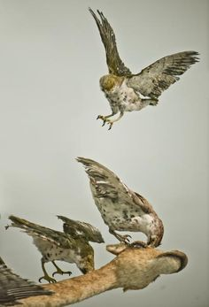 Flying Together | Cai Guo-Qiang