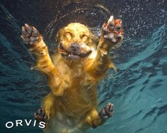 hahaha, this is definitely what Toby looks like when he jumps in our pool.