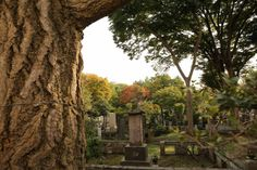 Zoshigaya cemetery is a veritable who's who of yesteryear with graves of famous authors, artists and explorers. Even now it is full of postmortem paparazzi hoping to catch a glimpse of the long-gone famous.