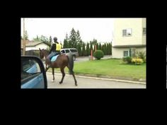 Road Safety for Horse, Rider, and Drivers!  Must watch video!