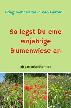 Hier erfährst Du, wie Du eine einjährige Blumenwiese im Garten anlegst.#blumenwiese #garten #farbereich