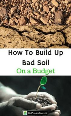 If you've got bad soil, you know how frustrating it is to put plants in the ground and see your time and money wasted. Here's how to improve bad soil without breaking the bank. #thepclife #permaculture #badsoil #gardening