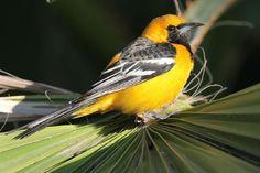 San Jose's Estuary and Bird Sanctuary