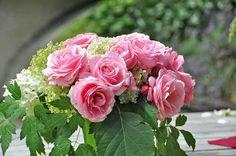""" Billet Doux "" (DELrosar) - Light pink, white, cream stripes - No fragrance - Delbard (France), 2010"