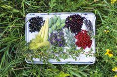 Des plantes comestibles cueillies dans la nature par le chef Sean Sherman dans le Dakota du Nord.Dans le sens des aiguilles d'une montre en partant du coin gauche: groseillier à maquereau, <em>baby corn,</em> asclépiades,cerises de Virginie, <em>amorpha canescens,</em> shépherdie, sauge blanche, fleurs de bergamote et branche de genévrier.