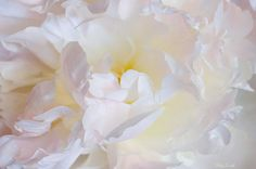 Absolutely gorgeous artistic capture!!! Magnificent nuances of soft whipped cream color and light!