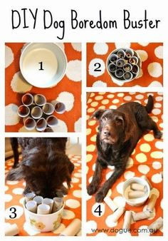 Best DIY Projects: Easy to make DIY Dog Boredom Buster! The paw-fect interactive dog toy to keep Fido entertained.