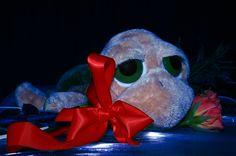 Tortue (2007) : cadeau de la St-Valentin
