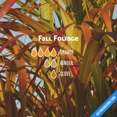 56 Fall Diffuser Blends (With FREE eBook!) Autumn Sinus Comfort Blend for oil diffuser: Peppermint, Lavender, Eucalyptus, Orange Fall Essential Oils, Ginger Essential Oil, Essential Oil Diffuser Blends, Essential Oil Uses, Young Living Essential Oils, Doterra Diffuser, Young Living Oils, Perfume, Orange