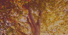 Arborele Genealogic Painting, Art, Art Background, Painting Art, Kunst, Paintings, Performing Arts, Painted Canvas, Drawings