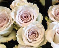 Early Grey - Standard Rose - Roses - Flowers by category | Sierra Flower Finder