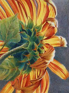 2785 best colored pencil art images on pinterest colouring pencils