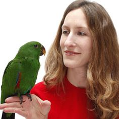 Avoid these 11 parrot no-nos, such as triggering your pet bird's hormones or giving up on feeding it healthy foods.