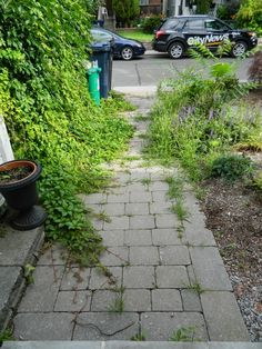 Organic Gardening Classes Near Me Toronto Gardens, Interlocking Pavers, Front Path, Virginia Creeper, Pea Gravel, Gardening Services, Before And After Pictures, Great Coffee, Summer Garden