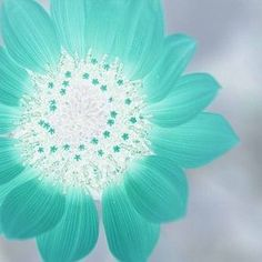 sunflower- favorite flower. Teal - favorite color!