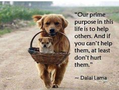 Wise words from the Dalai Lama. - Our prime purpose in this life is to help others. And if you can't help them, at least don't hurt them. Dog Quotes, Life Quotes, Animal Quotes, Hurt Quotes, Daily Quotes, Success Quotes, Dog Sayings, Quotes Pics, Lovers Quotes