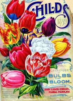 1898-Childs-Tulips-Vintage-Flowers-Seed-Packet-Catalogue-Advertisement-Poster