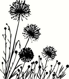 Plants composition Royalty Free Stock Vector Art Illustration Summer meadow with variable plants. Doodle Drawing, Dandelion Art, Dandelion Leaves, Silhouette Art, Wall Decal Sticker, Free Vector Art, Art Drawings, Flower Drawings, Art Projects