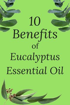 The benefits of eucalyptus essential oil are wonderful and multi-faceted! So it's not surprising that it's used widely in many over-the-counter products. Eucalyptus Oil Benefits, Eucalyptus Essential Oil Uses, Calendula Benefits, Essential Oils, Natural Health Remedies, Natural Cures, Herbal Remedies, Natural Healing, Herbal Medicine