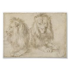 Two Seated Lions by Albrecht Dürer, 1521, silverpoint drawing on toned prepared paper. In the Renaissance, artists would coat paper with gesso and draw upon it with a finely sharpened, pointed piece of silver that darkened with age. No graphite pencils.