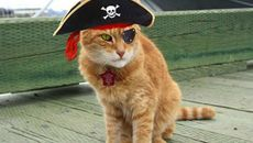 This Sailor Cat is Getting an Elaborate Retirement Party
