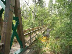 Suspension Bridge at Munson Pool near Milton, Florida