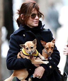 Sandra Bullock is another celebrity who has elected to adopt her dogs from rescue groups and shelters. So far, her clan includes Poppy, a tripod, and Ruby, a two-legged Chihuahua (both shown above).