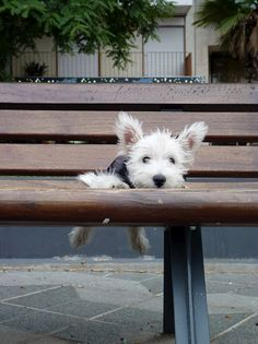 DogBench