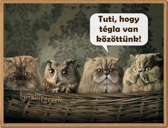 vicces, humoros, aranyos, állatok, képek, bagoly, macska, kém,